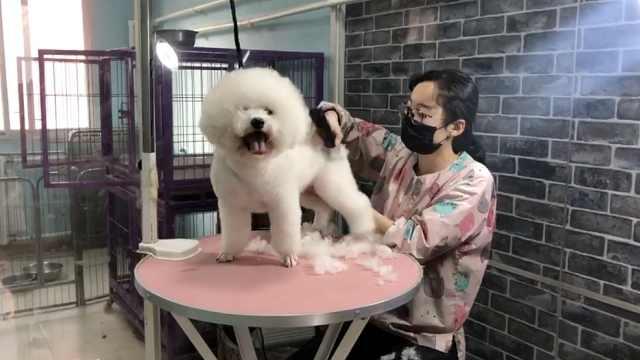 宠物美容店爆满,顾客提前1个月预约
