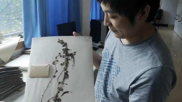 """西藏发现""""隐世""""百年植物物种,科学家刚给它取好中文名"""