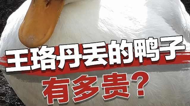 王珞丹前几天丢的鸭子多少钱一只?