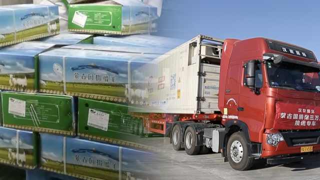 蒙古国捐赠羊12000只加工后已装车,湖北接羊车队今日返程