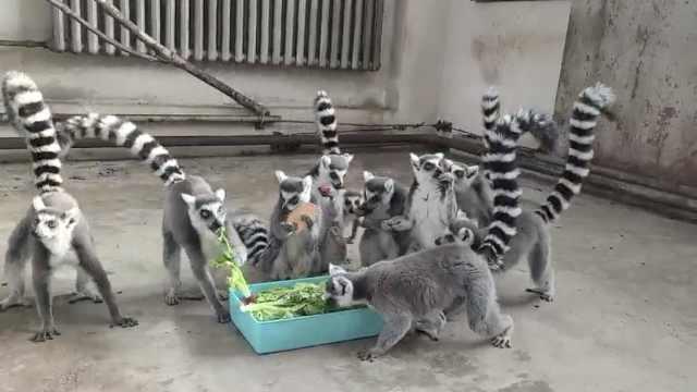 """新年福利!动物园推出""""美食盲盒"""",动物们拆到手软"""