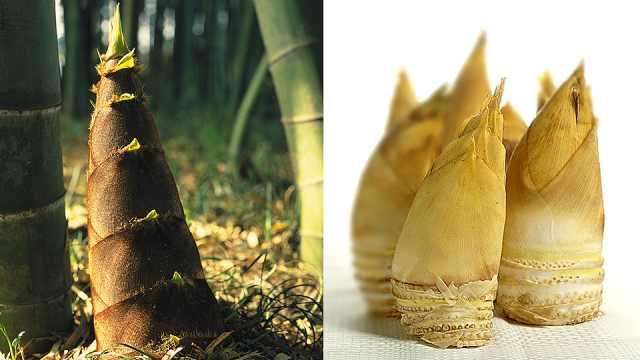 竹笋竟有80多种!你知道怎么区分吗?