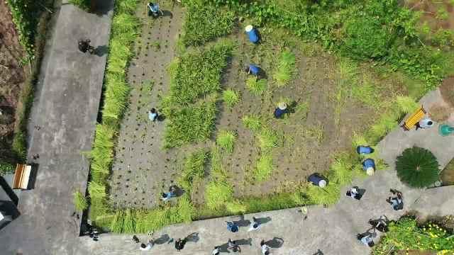 重庆一公司楼顶现2万平农场:员工摇号认领土地,收成够全家吃