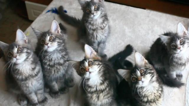 多看猫咪视频竟可提高工作效率!