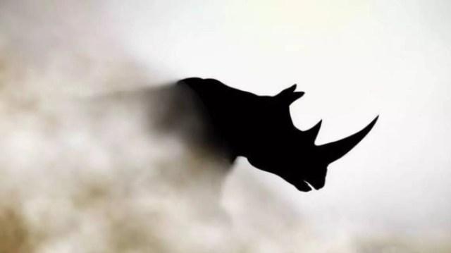 震惊整个金融界的灰犀牛到底是什么