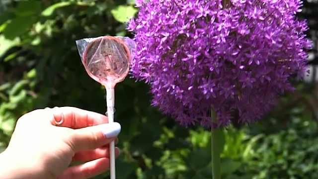 神奇棒棒糖,吃完扔土里能长出花草
