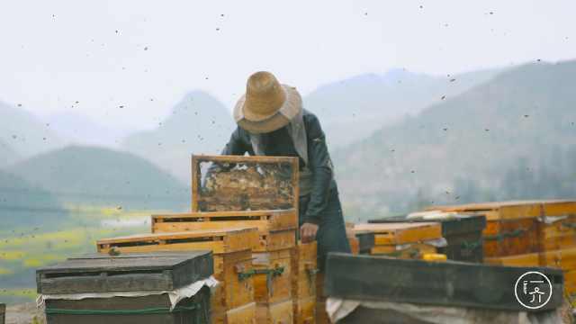 养蜂人自由背后的辛苦