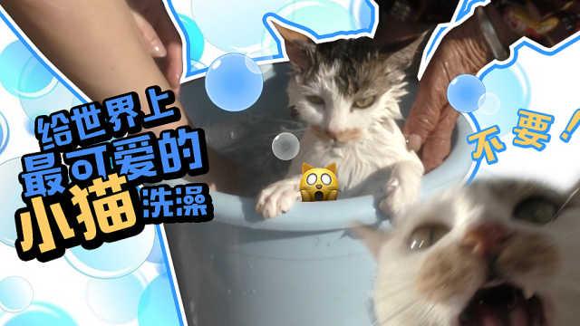 2分钟教你学会猫洗澡