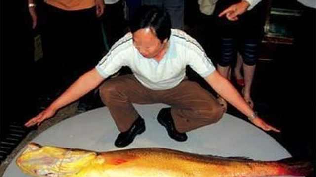 世界上什么鱼最贵?贵到什么程度?