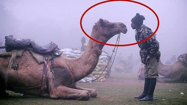 印度用骆驼对抗中国被批无脑