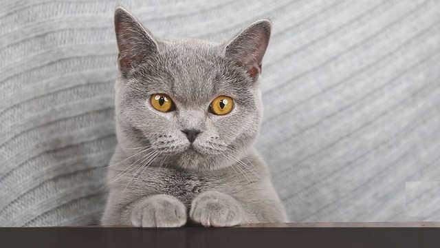 每周喵闻,帮你快速掌握猫界动向