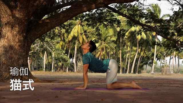 sikana瑜伽教程:猫式