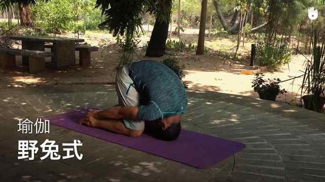 sikana瑜伽教程:野兔式