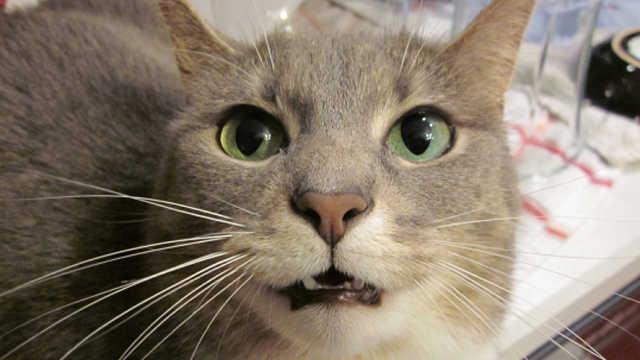 偷拍:猫前人后的隐秘生活