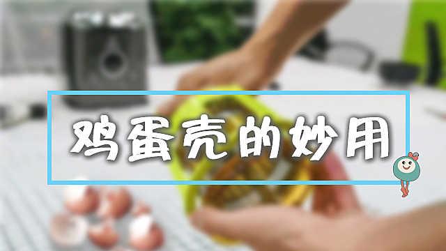 把鸡蛋壳放进榨汁机,奇迹发生了