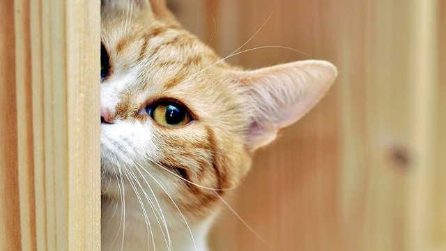 按摩、K歌、看球赛猫私生活大放送