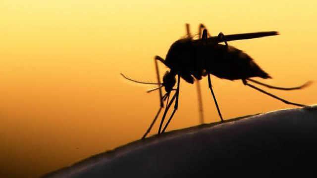 如果蚊子灭绝了,地球会什么变化?