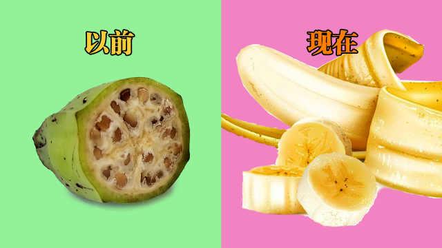 """没种子怎么繁衍?香蕉全靠""""克隆"""""""