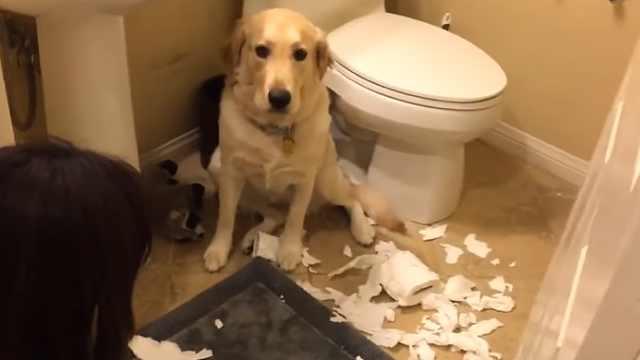 """狗狗""""犯罪""""现场:假装不是我干的"""