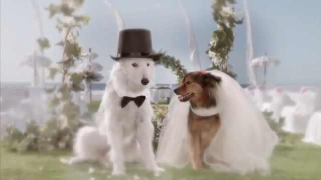 一见钟情的狗狗却被主人的无能阻止