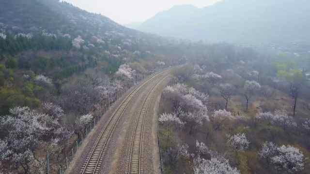 """航拍居庸关花海""""开往春天的列车"""""""