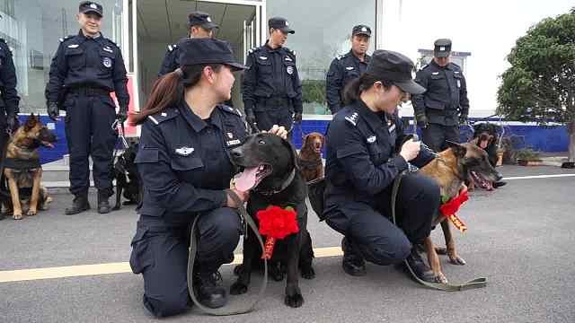 退役警犬的晚年生活:由训导员陪伴