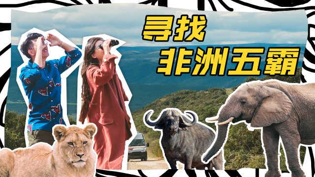 一秒带你回到童年最爱《动物世界》