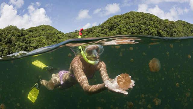 全球最贵天然游泳池,全是水母