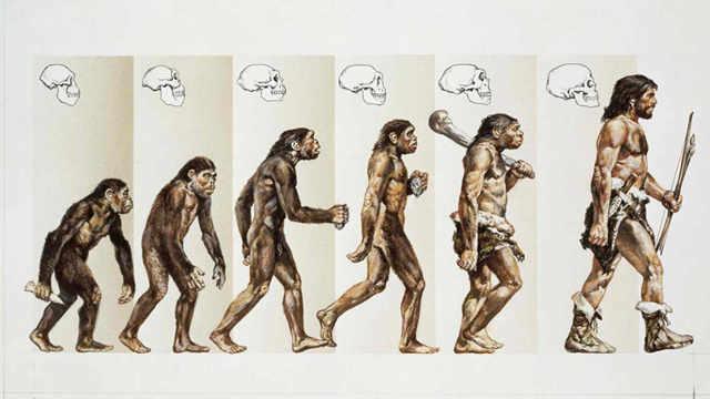 进化失败的猿猴,最后变成什么了?
