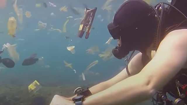 塑料垃圾接管海洋,成动物无情杀手