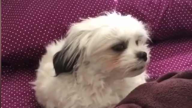 不想起床的狗狗,就像节后上班的你