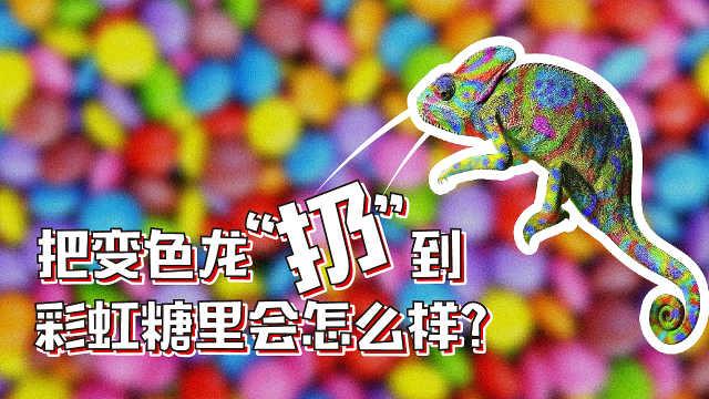 把变色龙扔到彩虹糖里会怎么样?
