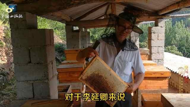 口水直流!纯天然野蜂蜜边割边吃