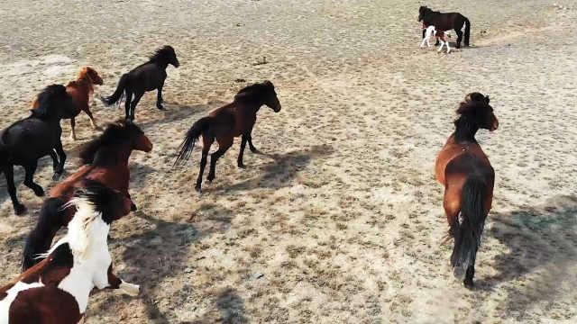 航拍新疆阿勒泰草原,场面好壮观!