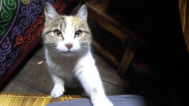 猫咪向游客讨吃的,靠卖萌养活自己