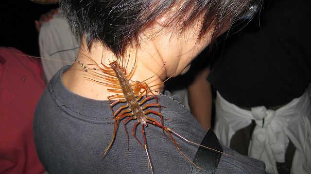 为什么家里进了这种虫千万不要打?
