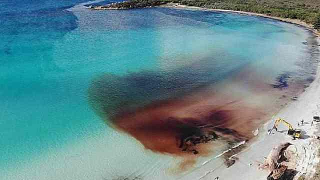 巨鲸尸体血染大海,引来成群鲨鱼