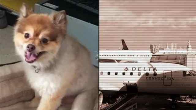 达美航空又出事!乘客爱犬意外死亡
