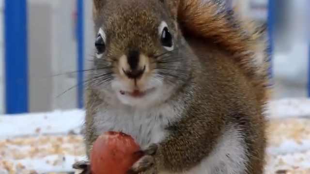 科普:关于松鼠的那些冷门知识