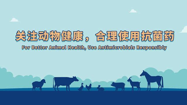 关注动物健康,合理使用抗菌药