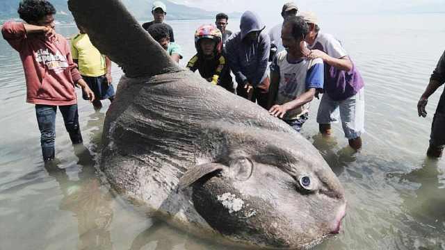 世界上最笨的鱼,连游泳都不会