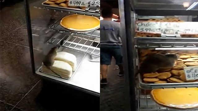 蛋糕店惊险大老鼠,顾客围观引轰动