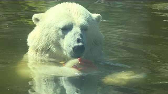 好奇吗?柏林动物园的动物如何降温