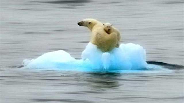 如果北极圈融化,地球会发生什么?