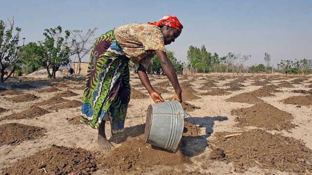 非洲向中国学习治沙