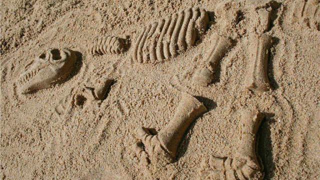 化石是考古学家挖出来的?其实不然