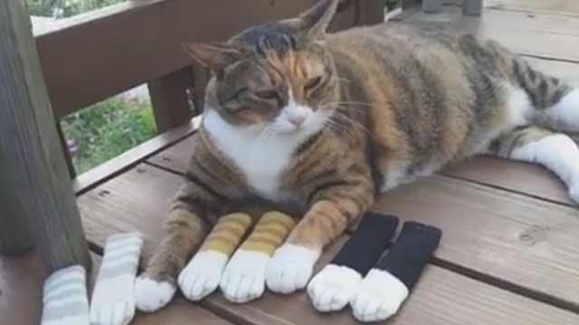 主人给喵做一排可爱手套,喵不领情