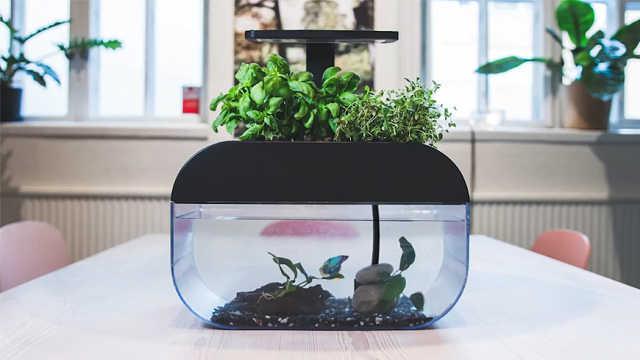 既是花盆也是智能鱼缸,不用施肥