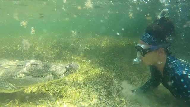 潛泳者與鱷魚面對面接觸,毫無畏懼