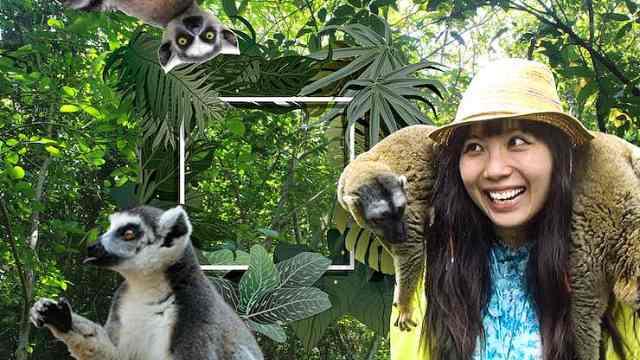 在马达加斯加,遭遇狐猴国王骚扰